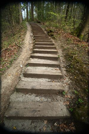 steps leading up a hill in a forest
