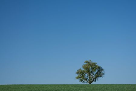 single tree stand in a green meadow with clear blue sky
