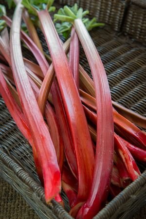 Freshly cut organic rhubarb pieces