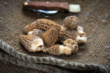 Fresh Morels Mushrooms on rustic background Stock Photo - 40290376