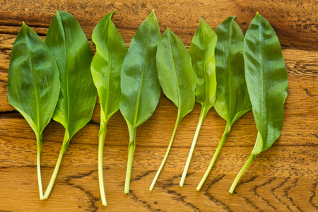Fresh ramsons on a rustic wooden plate Stock Photo - 57857102
