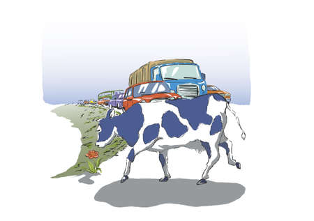 traffic jams: The cow found a beautiful flower. And blocking the road, causing traffic jams.