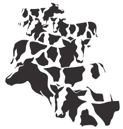 husbandry: Camouflage pattern of cow
