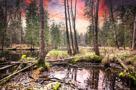 Autumn scenery in the forest. Rural fall relaxing landscape with water lake in the background. Beautiful color forest with sunset. Standard-Bild