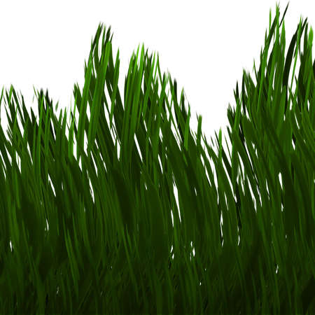 pasturage: green grass