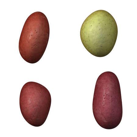 four potato Stock Photo - 12500926