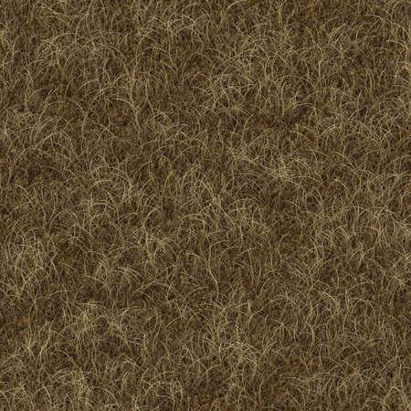 grass texture Stock Photo - 20488152