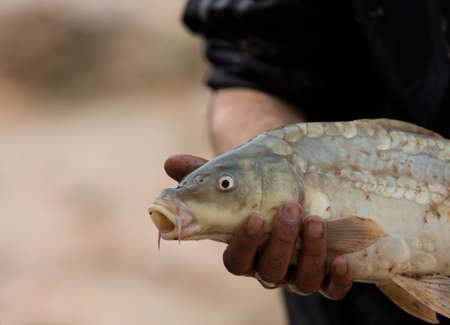 dead fish: Dead fish hunted from Tigris rive in Iraq