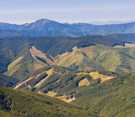 decimated: Panorama of Carpathian mountains in summer sunny day with results of deforestation