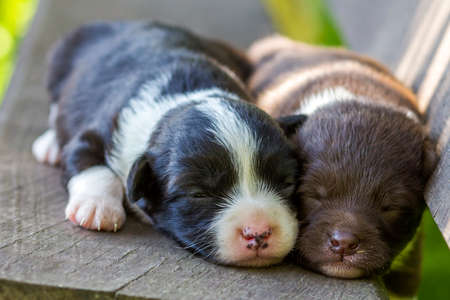 Two little puppy dogs sleeping on wooden bench Stock Photo