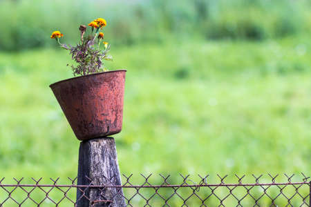 Old pot with flowers on a pole of chain link fence