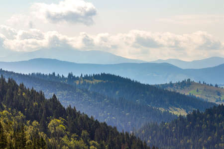 Majestic view of magnificent Carpathian mountains, densely covered with green forest, Ukraine. Foggy mountain ridges in distance, soft sunshine, bright sky with white clouds.