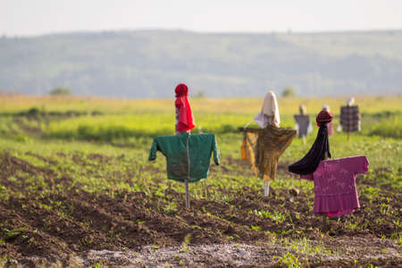 Close-up of funny scarecrows guarding from birds tender green sprouts in plowed field on blurred bright sunny rural background. Farming, agriculture and traditional harvest protection concept. 스톡 콘텐츠