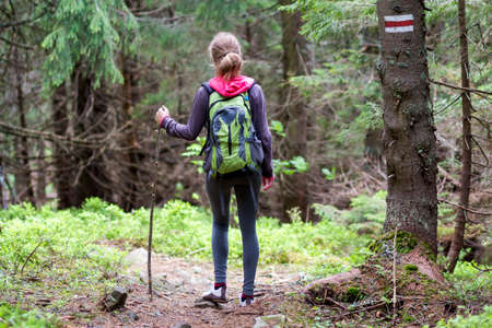 Back view of slim athletic blond tourist hiker girl with stick and backpack walking through lit by sun dense evergreen mountain pine forest. Tourism, traveling, hiking and healthy lifestyle concept. Banque d'images