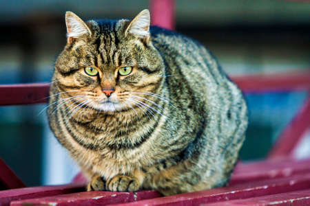 Portrait of a fat striped cat with green eyes Stock Photo