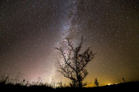 Beautiful panorama, rural landscape at night. Dark contrast silhouette of lonely tree on dark sky with myriads of white sparkling stars, Milky Way galaxy and distant horizon copy space background.