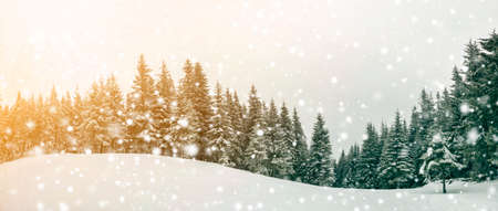 Fairy tale winter landscape. Pine trees with snow and frost on mountain slope lit by bright sun rays on blue sky and falling snowflakes copy space background. Happy New Year and merry Christmas card.