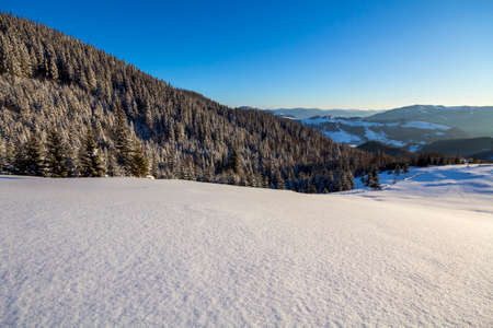 Winter Christmas landscape of mountain valley on frosty sunny day. Covered with frost tall fir-trees in deep snow, woody dark mountain ridge, soft glow on horizon, blue sky copy space background. Stock Photo