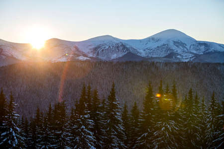 Winter mountains landscape panorama at sunrise. Clear blue sky over dark spruce pine trees forest, covered with snow mountain ridge peaks, bright rays of raising sun at dawn.