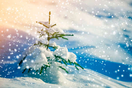 Young tender spruce tree with green needles covered with deep snow and hoarfrost and large snowflakes on blurred blue colorful copy space background. Merry Christmas and Happy New Year greeting card.
