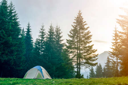 Tourist tent on grassy valley among tall green spruce trees on distant misty blue mountain and clear sky at sunrise background. Summer camping in mountains at dawn. Tourism, hiking concept. Reklamní fotografie