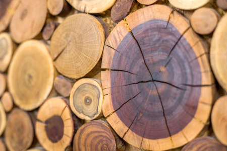 Perspective view of round wooden unpainted solid natural ecological soft colored brown and yellow crackled stumps background, tree cut sections with annual rings different sizes,background texture.