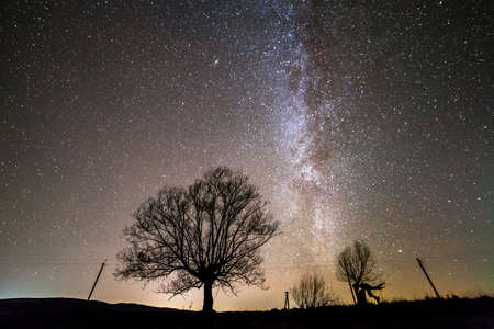 Rural landscape at night. Dark trees under black starry sky with Milky Way constellation.