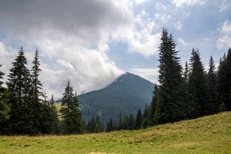 Panorama view of white cloud on top of mountain with green spruce forest and fir-trees on grassy meadow on sunny day. Summer mountain landscape. Imagens