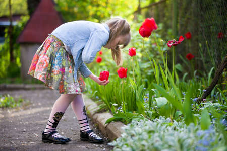 Profile of cute pretty child girl outdoor at flower bed looking at bright red tulip on sunny summer or spring day. 版權商用圖片
