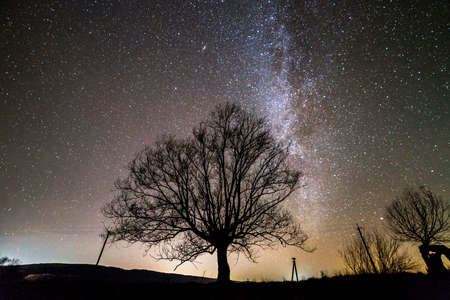 Rural landscape at night. Dark trees under black starry sky with Milky Way constellation.