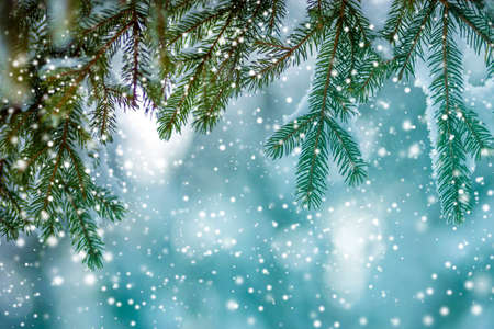 Pine tree branches with green needles covered with deep fresh clean snow on blurred blue outdoors . Merry Christmas and Happy New Year greeting postcard.