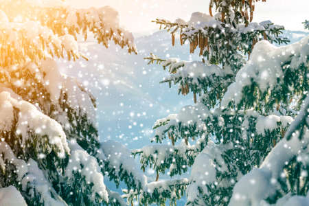 Spruce tree branch with green needles and cones covered with deep snow and hoarfrost and large snowflakes on blurred blue copy space background. Merry Christmas and Happy New Year greeting card.