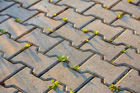 Onkruidplanten groeien tussen betonnen bestratingsstenen. Stockfoto