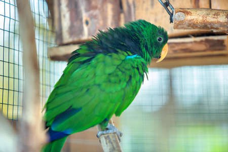 Colorful parrot in a cage at a zoo.