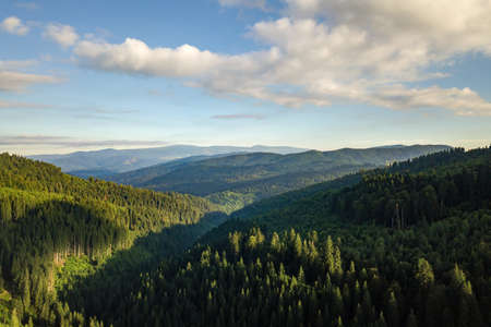 Aerial view of green mountain hills covered with evergreen spruce forest in summer.