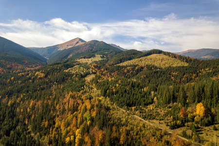 Aerial view of autumn mountain landscape with evergreen pine trees and yellow fall forest with magestic mountains in distance.