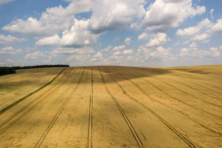 Aerial view of yellow agriculture wheat field ready to be harvested in late summer. Foto de archivo