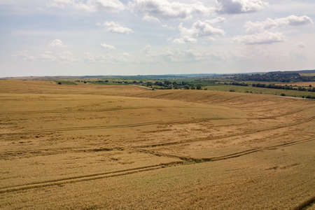 Aerial view of yellow agriculture wheat field ready to be harvested in late summer. Stok Fotoğraf