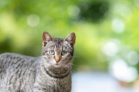 Cute gray striped cat standing outdoors looking in camera on summer street. 스톡 콘텐츠