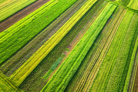 Aerial view of green agricultural fields in spring with fresh vegetation after seeding season on a warm sunny day. Banque d'images