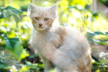 Portrait of a small yellow cat sitting in green grass on a sunny day. Banque d'images