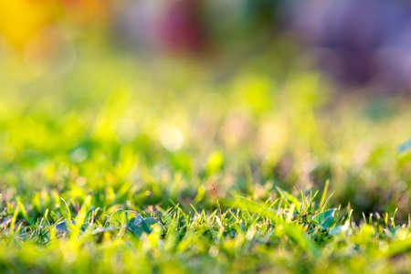 Close up of green grass covered lawn with vibrant colorful background. Banque d'images