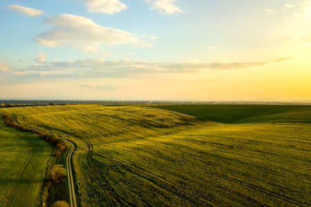 Aerial view of bright green agricultural farm field with growing rapeseed plants and cross country dirt road at sunset. Stockfoto