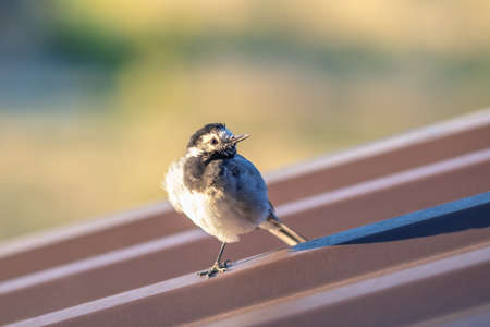 Small bird perching on metal building roof. Imagens