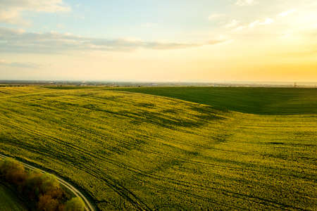 Aerial view of bright green agricultural farm field with growing rapeseed plants at sunset. Reklamní fotografie