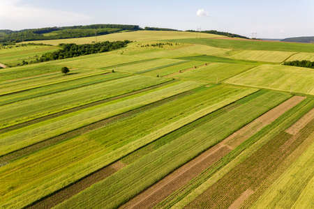 Aerial view of green agricultural fields in spring with fresh vegetation after seeding season on a warm sunny day. Reklamní fotografie