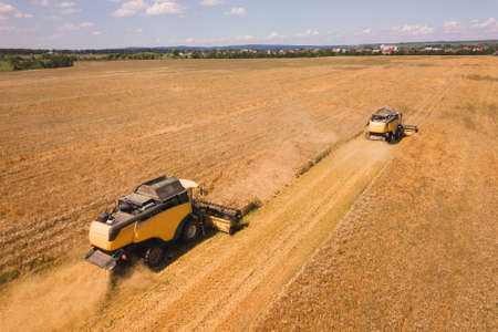 Aerial view of combine harvesters harvesting large yellow ripe wheat field.