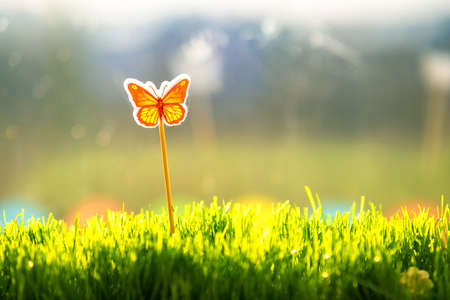 Close up of small green grass with special cute toy small butterfly. Concept of beautiful plants with decoration.