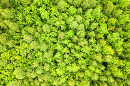 Top down aerial view of green summer forest with canopies of many fresh trees.