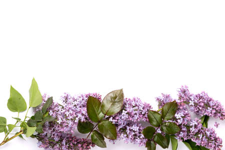 Fresh lilac flowers and petals on white background. Beautiful spring mockup backdrop. Flat lay, top view, space for text.